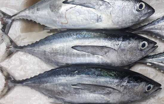 cách chọn cá ngừ đại dương nguyên con