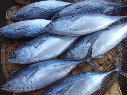 cá ngừ bông