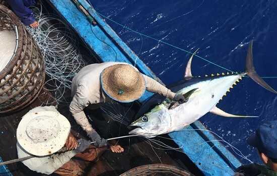 Cách bảo quản cá ngừ đại dương đúng cách