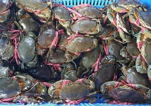 giá cua biển bao nhiêu 1kg hiện nay
