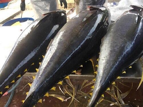 mua cá ngừ đại dương ở đâu